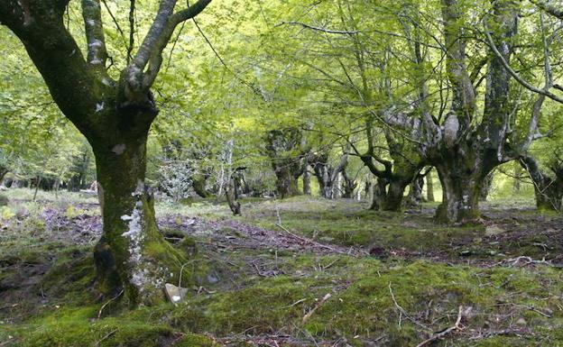 La frondosidad de los árboles nos acompaña en gran parte del camino.