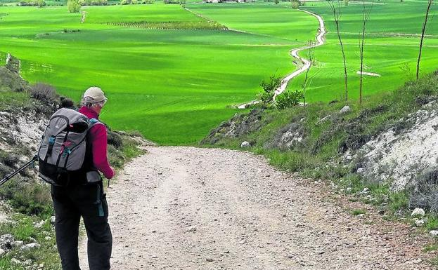 El camino serpentea por Tierra de Campos.