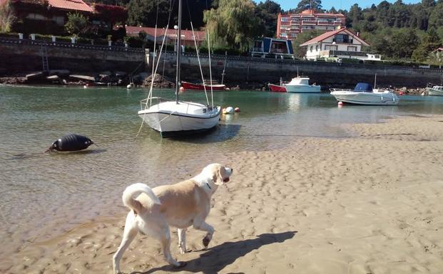 Un perro pasea suelto por la ría de Plentzia en marea baja. /EL CORREO