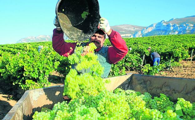 Un trabajador descarga las uvas recogidas en la vendimia de este año./ Rafael Gutiérrez