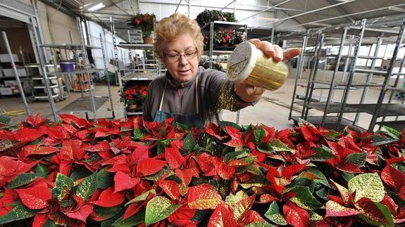 Todo Lo Que Debes Saber Para Cuidar La Flor De Pascua Esta Navidad